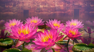Top New lotus flower full hd wallpapers pictures gallery. Download lotus flower full hd wallpapers and background images