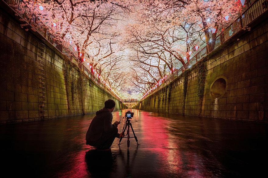 cherry-blossom-sakura-21