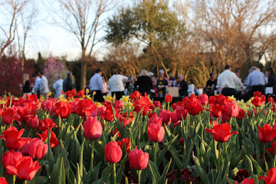 Chefs in Nature at the Dallas Arboretum Offers Cooking and Delectables in the Garden with Local Culinary Stars