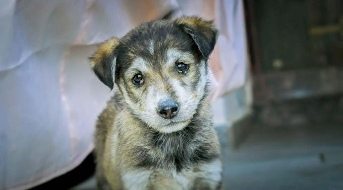 Borzasztó kegyetlenség: kiskutyákat kínzott és pusztított el egy ópusztaszeri férfi