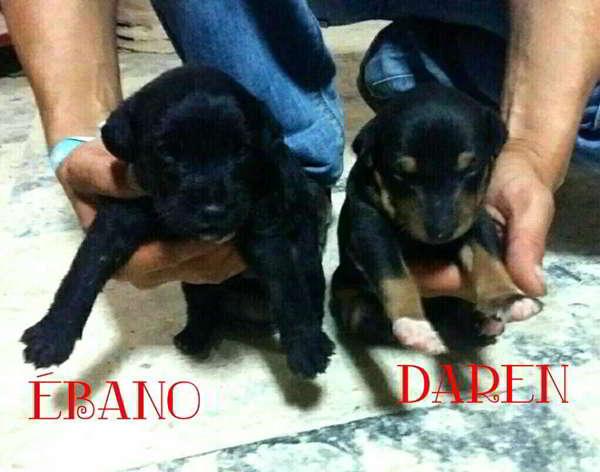 cachorras talla mediana