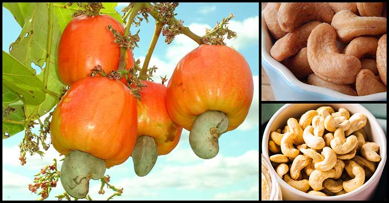 Cashews: What Are Its Benefits?