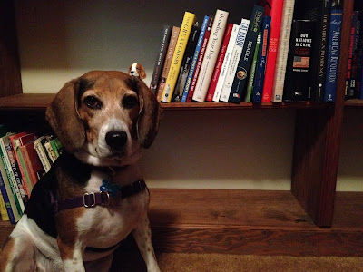 """Official looking legal beagle in official looking law office."""