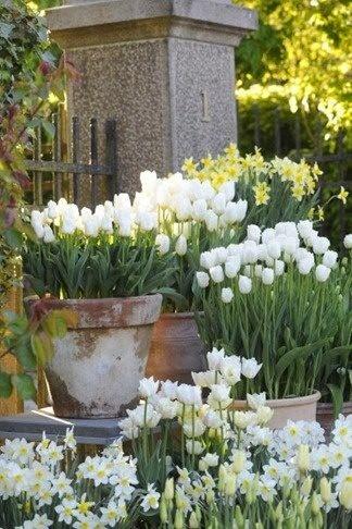 lo shabby di Mila Il meraviglioso mondo dei giardini