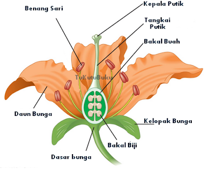 bagian bunga dan fungsinya lengkap, struktur bunga dan fungsinya lengkap, bagian bunga sepatu, bagian bunga sempurna dan tidak sempurna