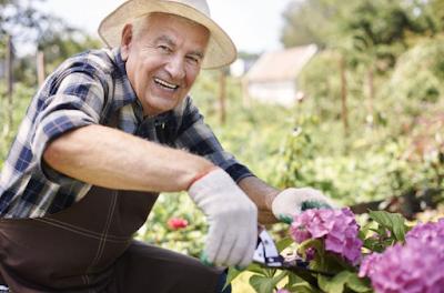 Selain Olahraga Berkebun Juga Bisa Buat Umur Panjang