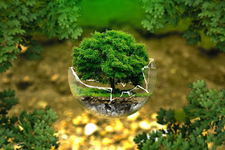 Orman Ağacı Bach Su Yolu Dalga Köprü Havuzu Orman Işık Yosun Ağaçlar Doğa Büyü Yolu Uzakta