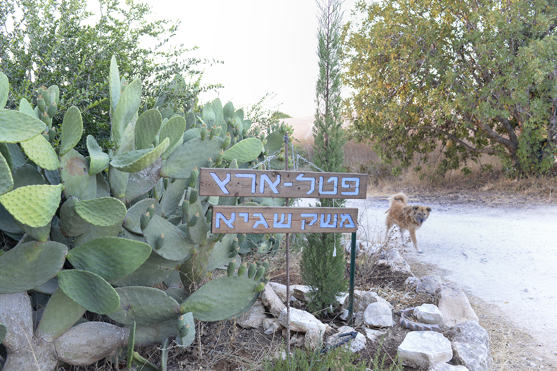 משק שגיא בשפלת יהודה