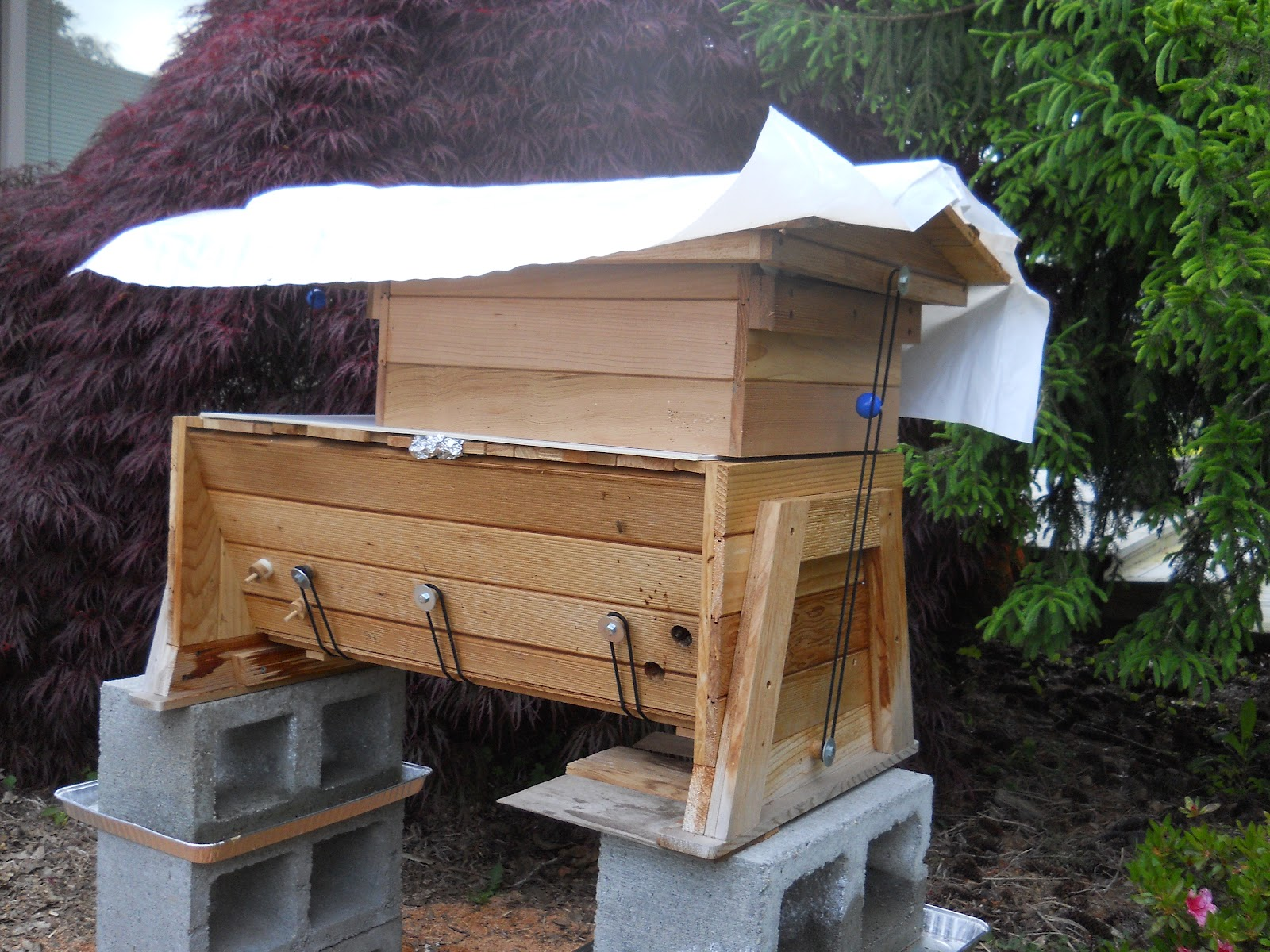 Che Guebee Apiary Managed Vs Unmanaged Brood Nest