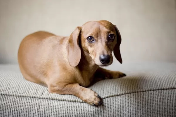 Information you should know before raising small dogs | cat and dogs