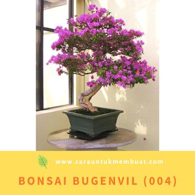 Bonsai Bugenvil (004)