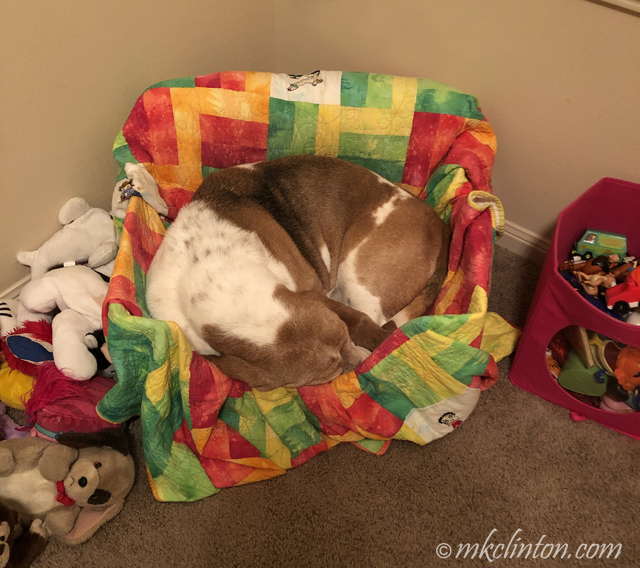 Basset hound in box