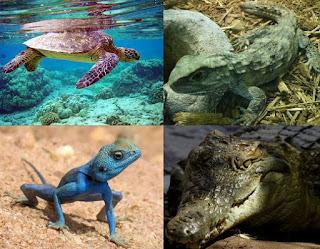 Macam-macam Contoh Klasifikasi Hewan Vertebrata (Hewan Bertulang Belakang)