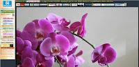 http://cei017.oxatis.com/PBCPPlayer.asp?ID=1786968&ADContext=1