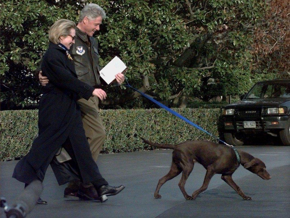 Dog Training In Clinton Ia