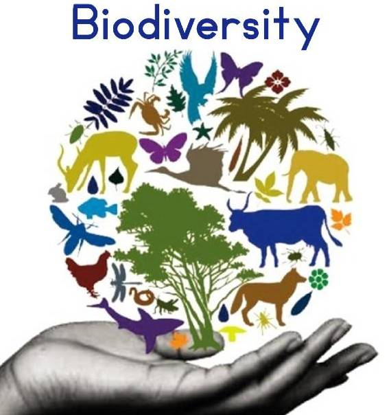 Biodiversity | Types, importance and conservation of biodiversity