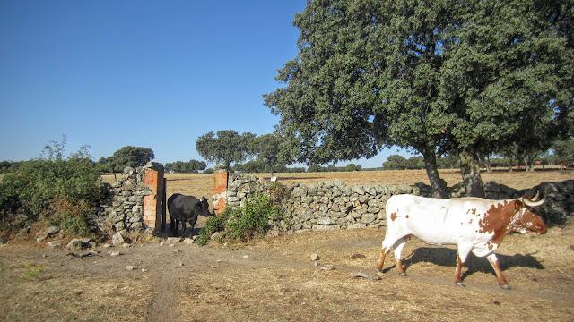 Dehesa de Moncalvillo - La Nava