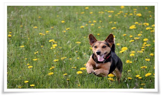 training of dog squads