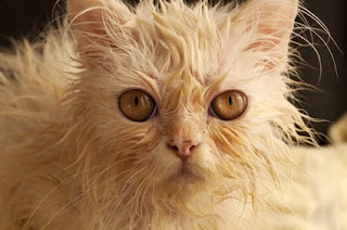 This poor, wet guy must not have been paying attention, because cats know when it's going to rain.