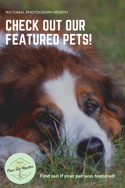 National Photograph Month: Meet the pets! Paws For Reaction