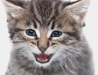 Entro 5 anni i gatti parleranno