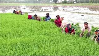 बारिश होने से किसानों को मिली राहत
