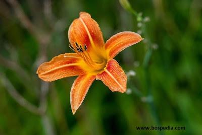kadang hanya memikirkan akan keluar untuk mengambil gambar dari kelopak cantik mereka bisa 3 Tips Memotret Foto Bunga yang tidak Seperti Biasanya