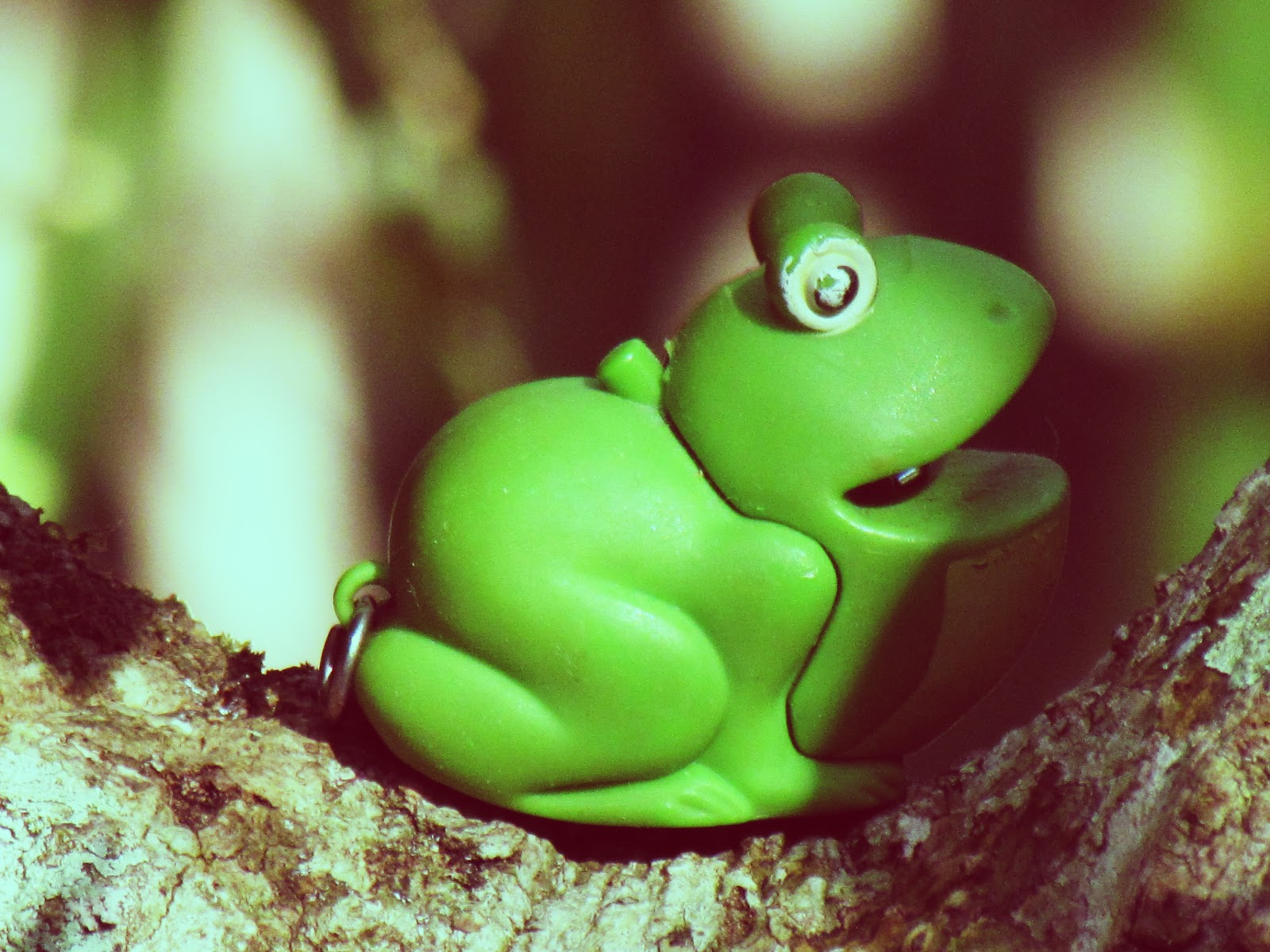 A toy frog flashlight nestled in the tree branches on fern trail in Hammock Park in Dunedin, Florida