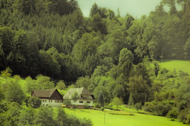 Kaempferia rotunda - Wikipedia, the free encyclopedia