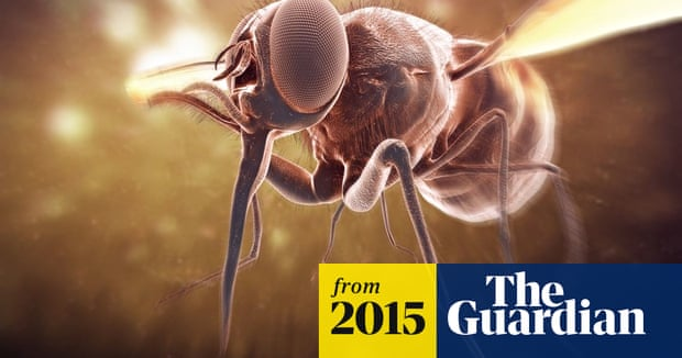How to Prevent Sleeping Sickness Caused by Tsetse Fly