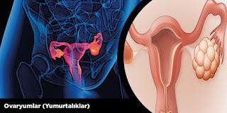 Ovaryumlar