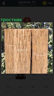На фоне кустов два рулона тростника стоят рядом, перевязанные