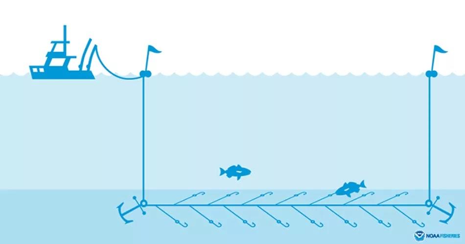 Bottom Fishing method, technique