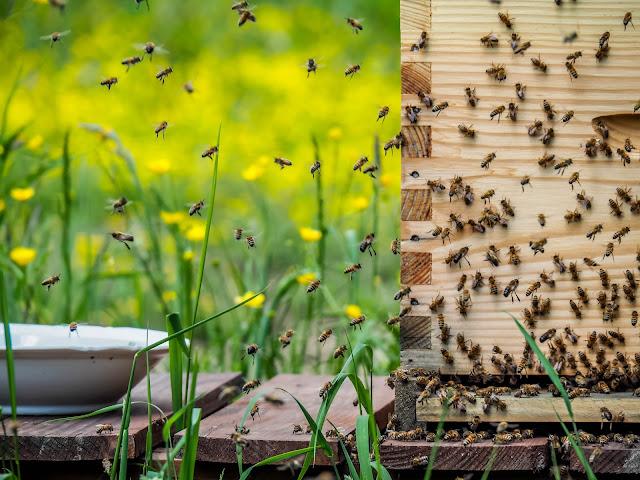 jonge bijen die invliegen