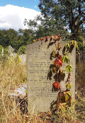 Autumn creeper climbing a tombstone