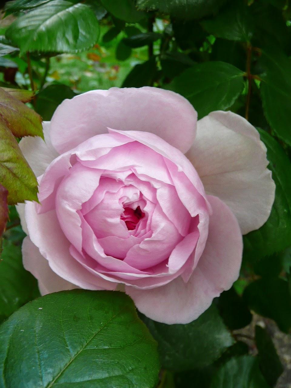 Notre Jardin Secret Fleurs D Avril Et Promesses De Mai