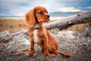 Güzel Köpek Resimleri ile ilgili aramalar köpek resmi indir  sevimli köpek fotoğrafları  köpek fotoğrafları pitbull  köpek cinsleri  köpek fiyatları  köpek resmi pitbul  köpek videoları  köpek fotoğrafı