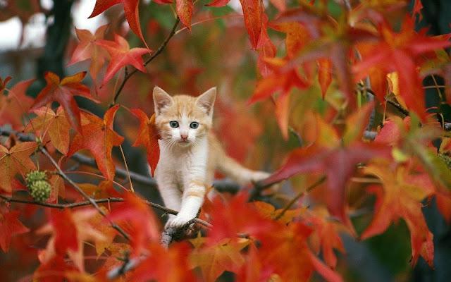 Kat in een boom in de herfst