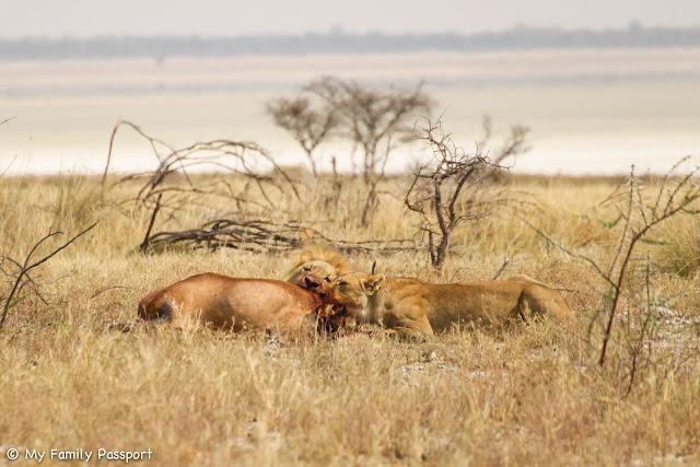 Namibia en familia