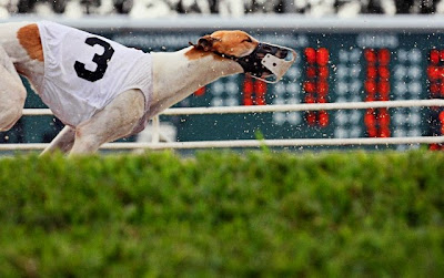 Pictures Of Dog Racing Florida West Palm Beach