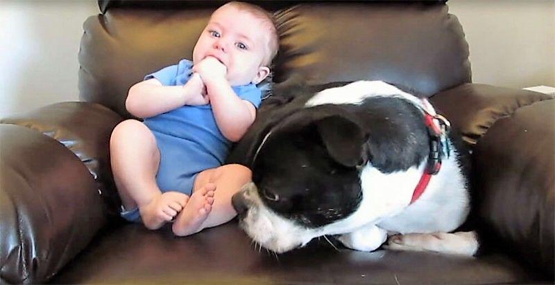 Μπέμπης τα κάνει πάνω του....Προσέξτε τώρα ΠΩΣ αντιδράει ο σκύλος και θα κλάψετε στο γέλιο! (βίντεο)