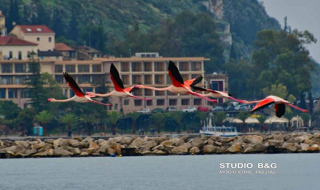 Ιπτάμενες φιγούρες από φλαμίνγκο στο Ναύπλιο (βίντεο)