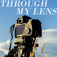 http://mersad-photography.blogspot.com/2019/02/looking-ahead-through-my-lens-nr-177.html