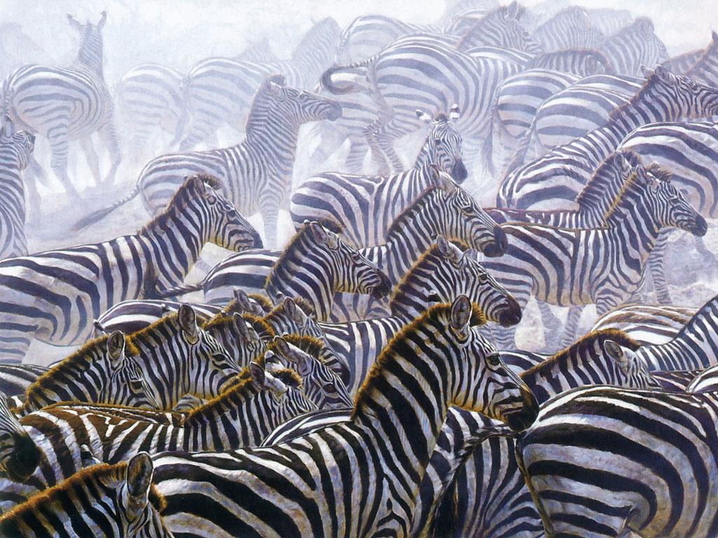 manada de cebras · conlosochosentidos.es