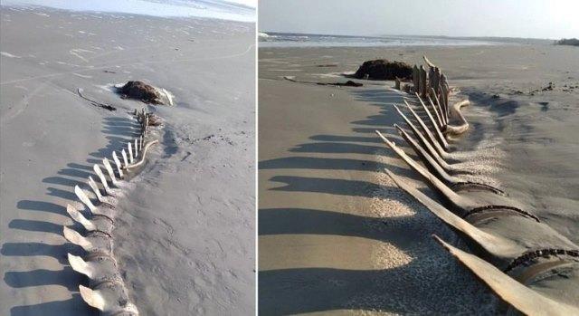 Esqueleto gigante aparece na areia de praia em Peruíbe