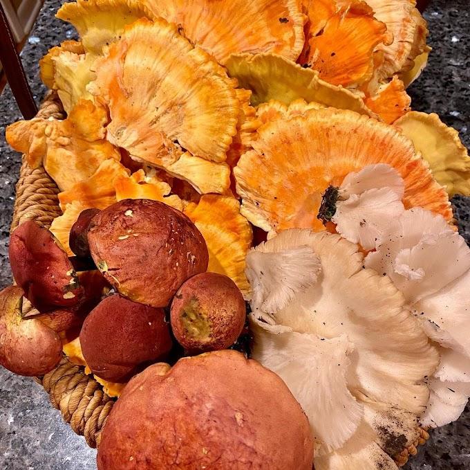 अळिंबी  मशरूम | Oyster Mushroom | Biobritte Mushrooms