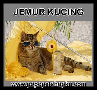 jemur kucing setiap pagi