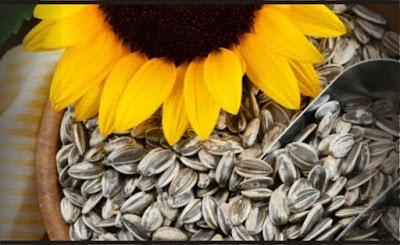 Kuaci / Biji Bunga Matahari