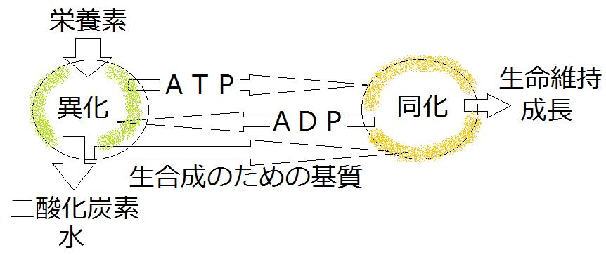 発酵 化学式 アルコール