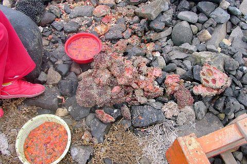 8. Pyura Chilen, The Living Rock